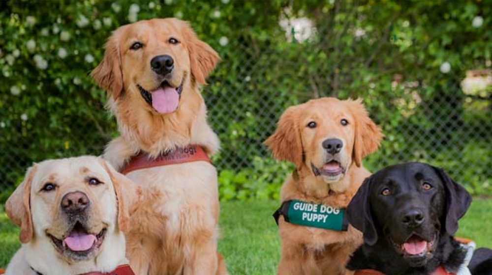 Guide Dogs of Hawaii
